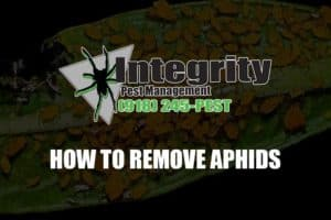 how to remove aphida
